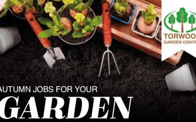 Autumn jobs for your garden