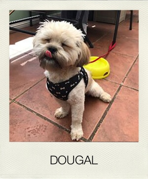 """image of dog""""Dougal"""""""