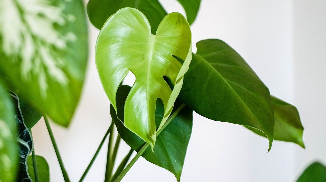 Top houseplants to improve your health